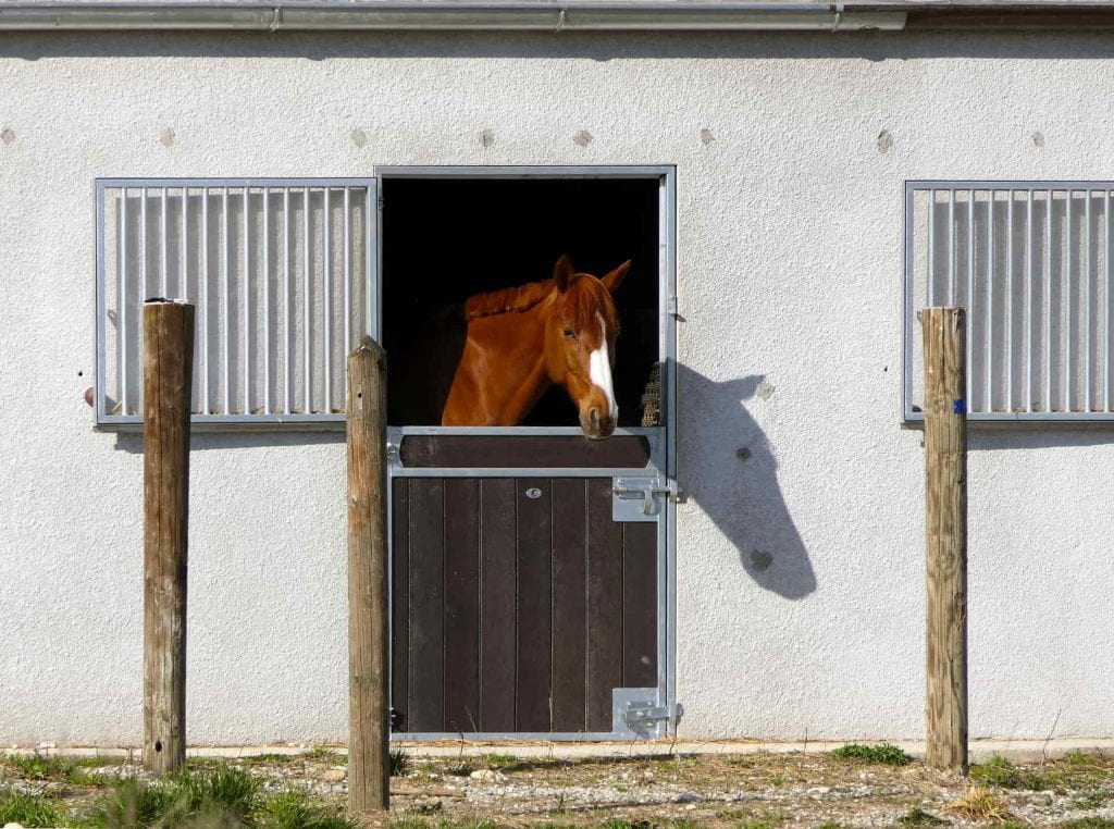 cheval box © Pixabay